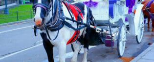 Häst och vagn i Central Park