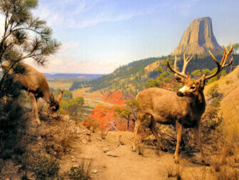 AMNH i New York - Diorana Wildlife