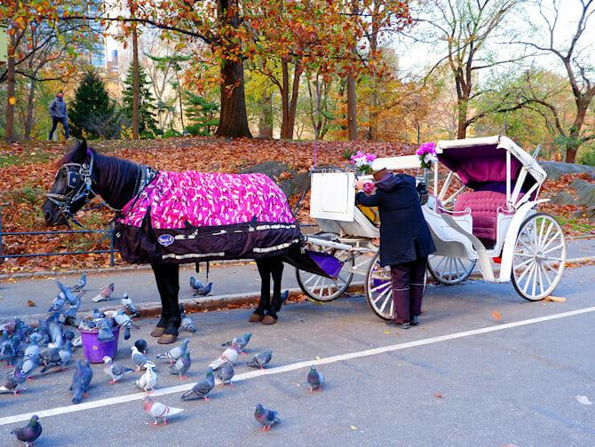 Häst och vagn i New York