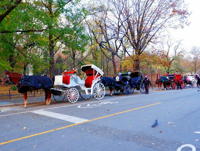 Häst och vagn genom Central Park i NYC