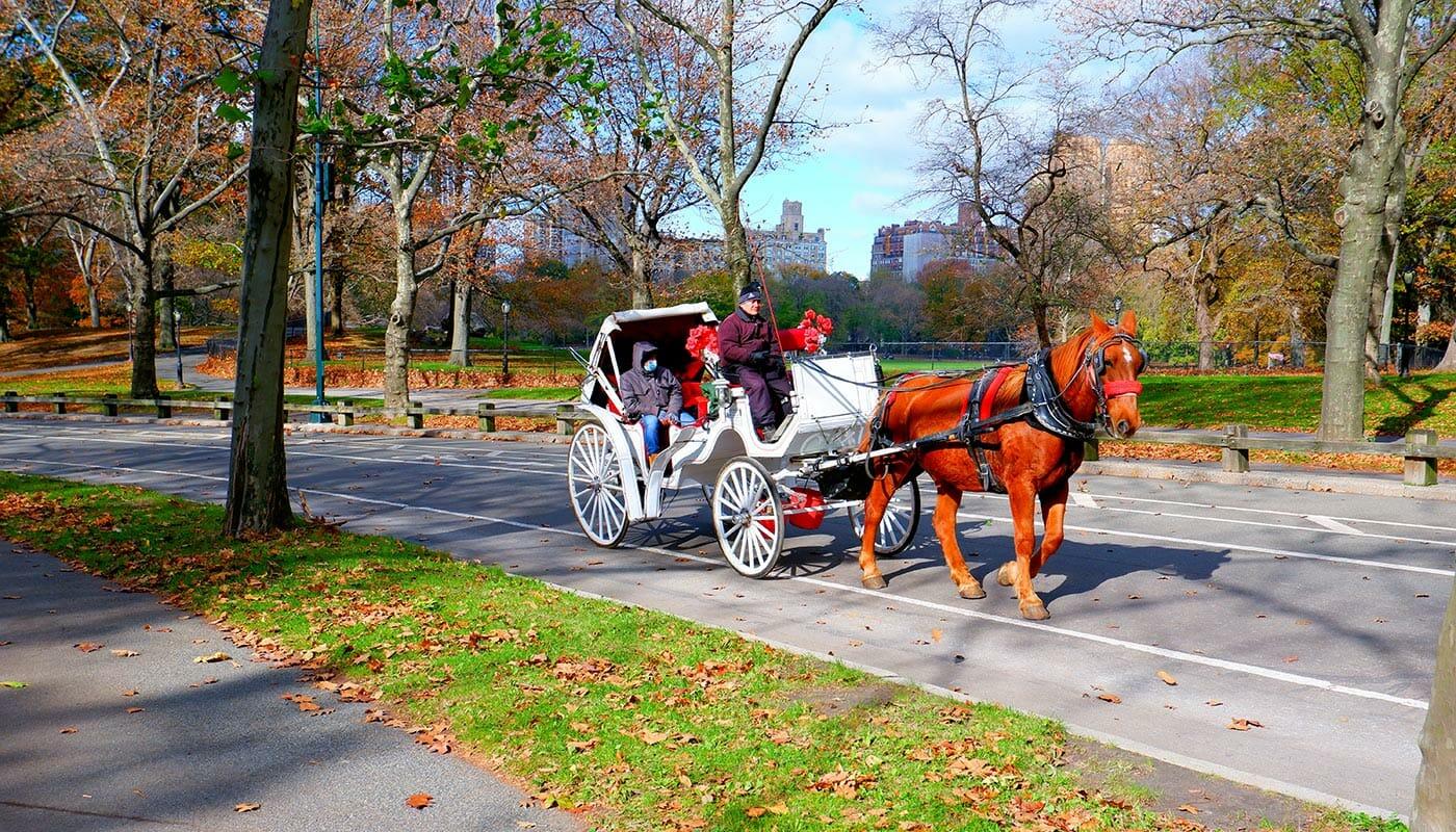 Häst och vagn i Central Park NYC