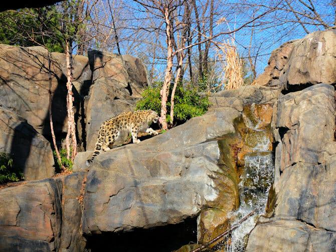 Central Park i New York - Zoo
