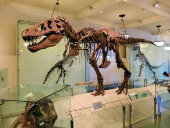 American Museum of Natural History i New York - Dinosaur