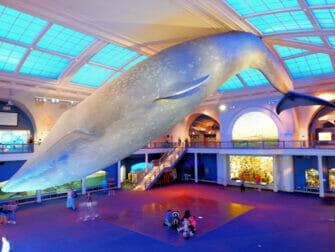 American Museum of Natural History i New York - Ocean Life