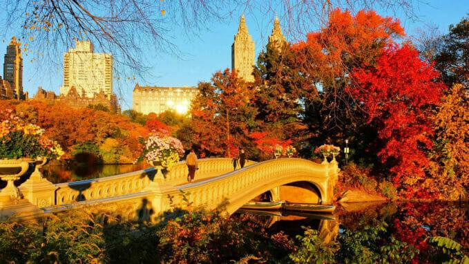 Host i Central Park – Zoom
